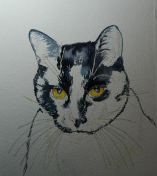 Kitty work