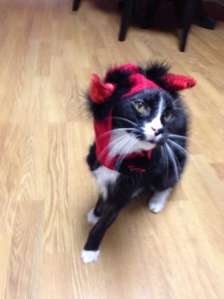 Dressed up cat