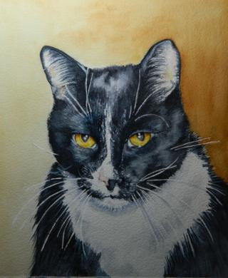 Kitty fini